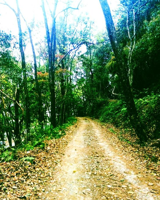 Naturephotography nepal beautiful forest mobile photography