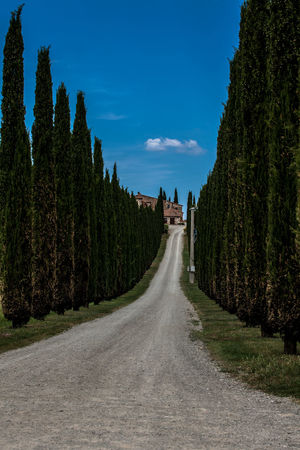 Val D'Orcia, Tuscany, Italy. Travelling through the countryside. Country Countryside Cypress Cypress Trees  Cypresshill Hills Hillside Italy Landscape Landscapes With WhiteWall Nature Travel Travel Photography Traveling Travelphotography Tree Tuscany Tuscany Countryside Tuscany Italy Tuscanygram Val D'orcia