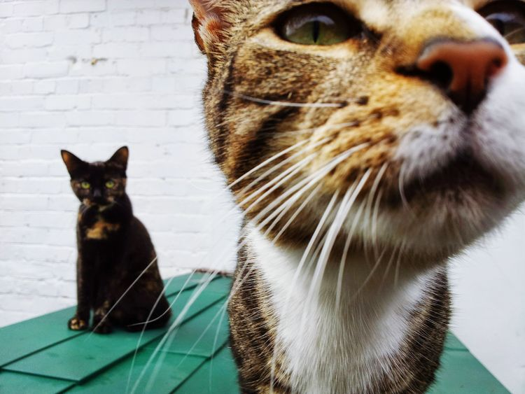 In your face... thug cats Domestic Cat Pets Feline Domestic Animals Animal Themes Sitting Whisker Curiosity Looking At Camera No People Yellow Eyes Kitten Close-up Day Cats Thugs Serious Judging Looks