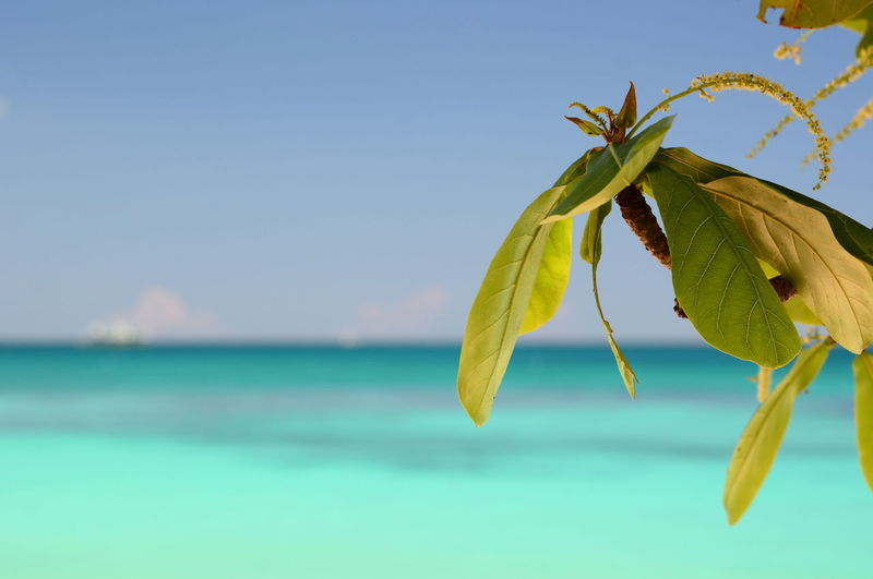 Close-up of plant against sea