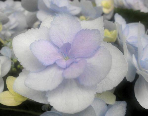 """""""エラチオールベゴニア"""" Enjoying Life Beautiful Flower Flowers Cute♡ Flowerporn"""