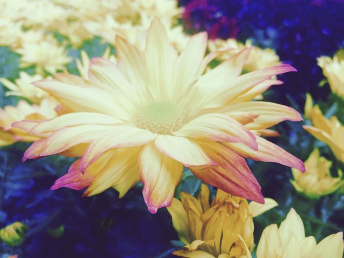 Happy Fall! Hello World Enjoying Life Happyfall Flowers