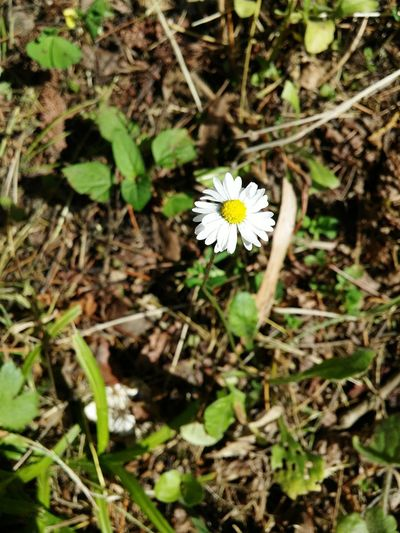 No Filter Spring Flower White Flower Yellow Woods
