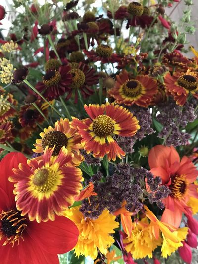 Bee Magnets Harbingers Of Autumn Heleniums & Dahlias Late Summer Colours Red,yellow, Purple, Brown Richness Of Colour And Texture The Jewels Of The Garden The Wow Factor Beauty In Nature Close-up Day Flower Flower Head Freshness Growth Late Summer Blossoms Nature No People Outdoors Petal Plant
