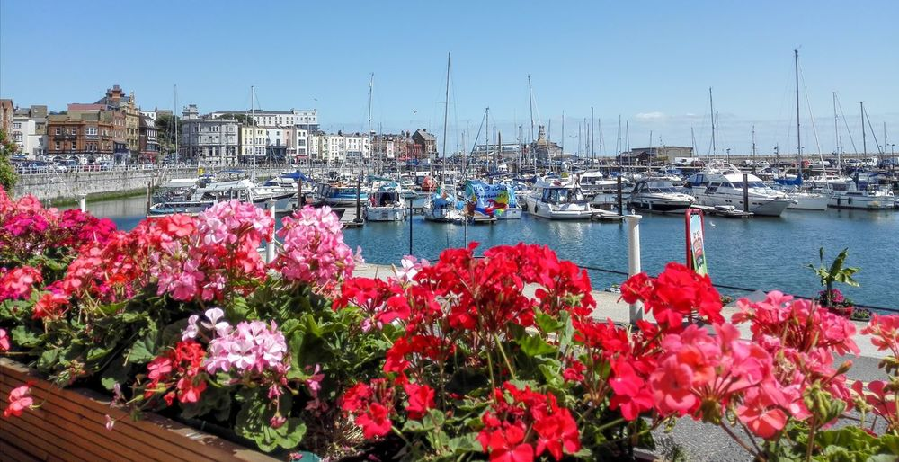 View of pink flowers in marina