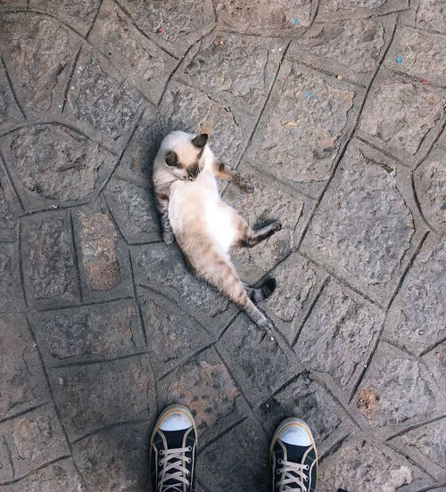 Lazy cat relaxing on the asphalt Cats Cats Of EyeEm Cat Pets Low Section Human Body Part Human Leg Standing One Person Shoe Body Part High Angle View Lifestyles Nature Directly Above Personal Perspective Unrecognizable Person Footpath Outdoors