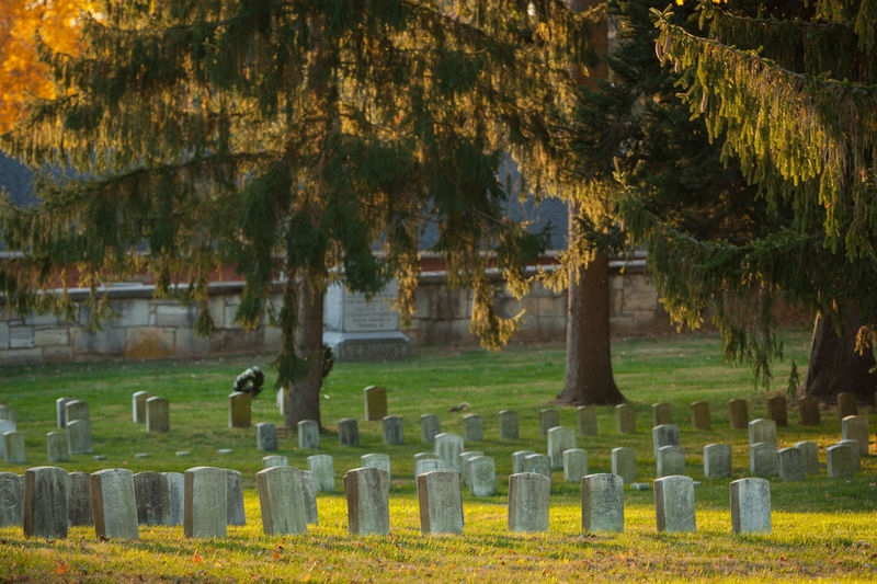 Trees growing in cemetery
