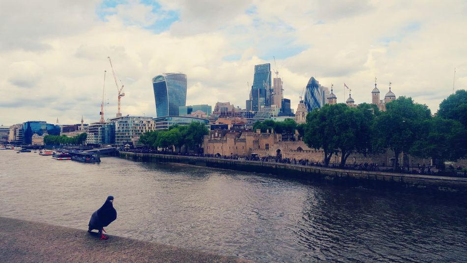 The Street Photographer - 2017 EyeEm Awards Pigeon London The Thames Uk Travel Destinations Sky Collection