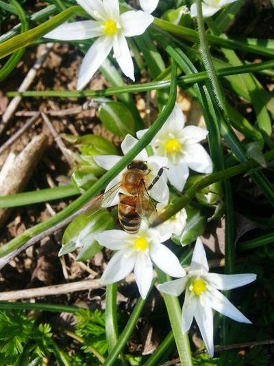 Nature Daylight Bolu  Flowers Bees