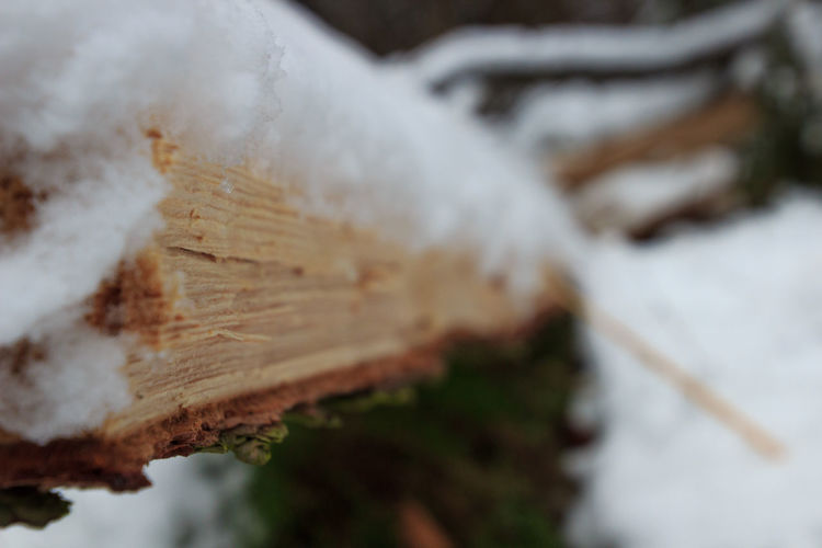 Snow Forest Green Wood - Material Shades Of Winter No People Day Winter Outdoors Close-up Nature