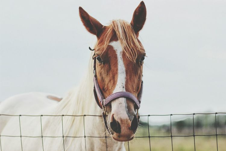 Portrait Of Horse In Pen Against Sky