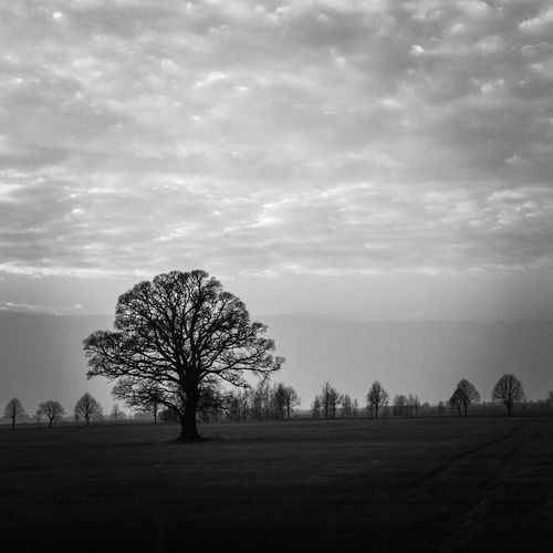 The lonely tree Living On Borrowed Time Bw_trees Tree_collection  Winter Trees Tree And Sky