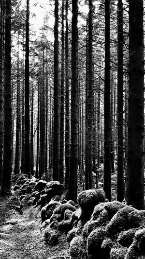 Nature Pattern Backgrounds Full Frame No People Black And White Hiking Outdoors Tranquility Mountain Snowdonia Beauty In Nature Trees Vertical Wall Old Overgrown Overgrown And Beautiful Moss Forest Forestwalk Forest Photography