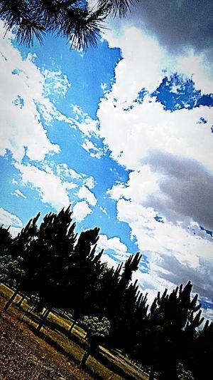 Park Day ! Meditation Time Blue Sky . Fresh-Air Restingtime Parque Metropolitano