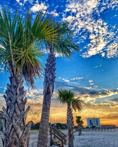 Ms Gulf Coast sunrise First Eyeem Photo