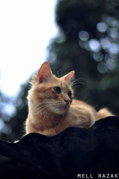 Vscoperak Vscomalaysian Cats Of EyeEm Vsconature Vscogrid Vscomalaysia Vscocam VSCO Catlovers Cat Eyes Cateyes Cats Cat Photography Cat Lovers Cats 🐱 Cat♡ Catmerah