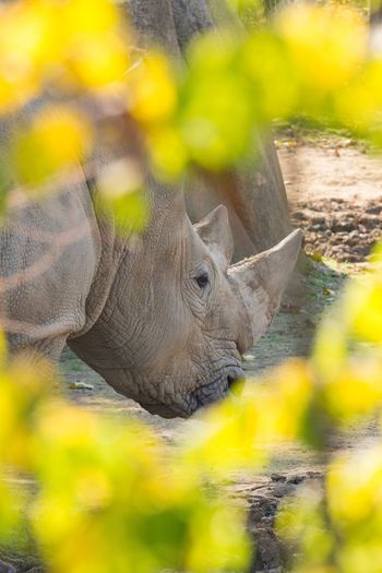 Hidden Animal Themes Animals In The Wild Animal Wildlife Outdoors Rhinoceros Rhino Nature No People Close-up Zoom Contrast Zoodevincennes Paris Paris, France  EyeEm Animal Lover