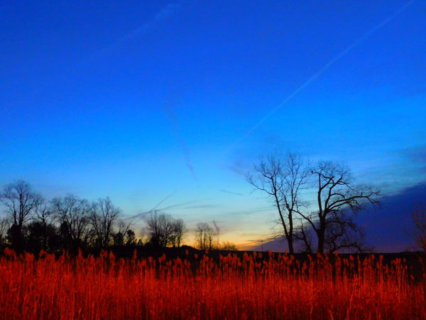 FieldPerspectives On Nature Nature Flower Plant Beauty In Nature Growth Tranquil Scene Rural Scene Scenics Sunset Tree Agriculture Tranquility Blue Outdoors Landscape Multi Colored Crop  No People Beauty Dramatic Sky Nature Silhouette Alexander Rolsen / EyeEm Postcode Postcards
