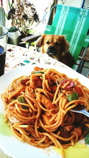 Pasta Spagetti with Dog i dont know what to say
