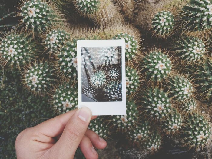Close-up of hand holding transfer print against cactuses