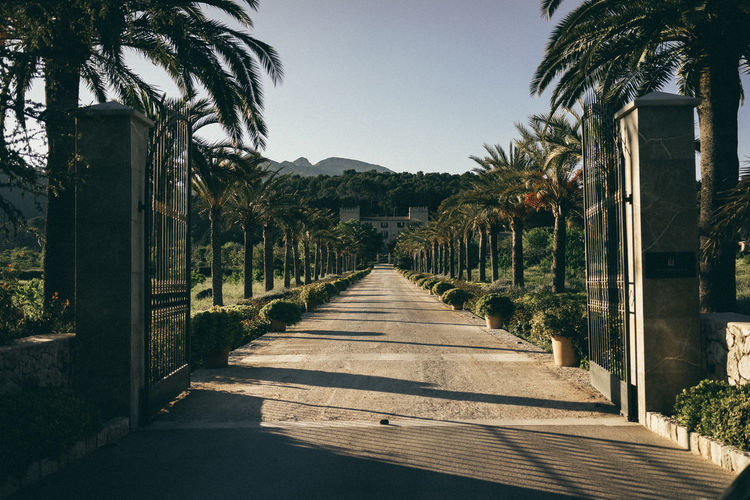 Walkway amidst palm trees against clear sky