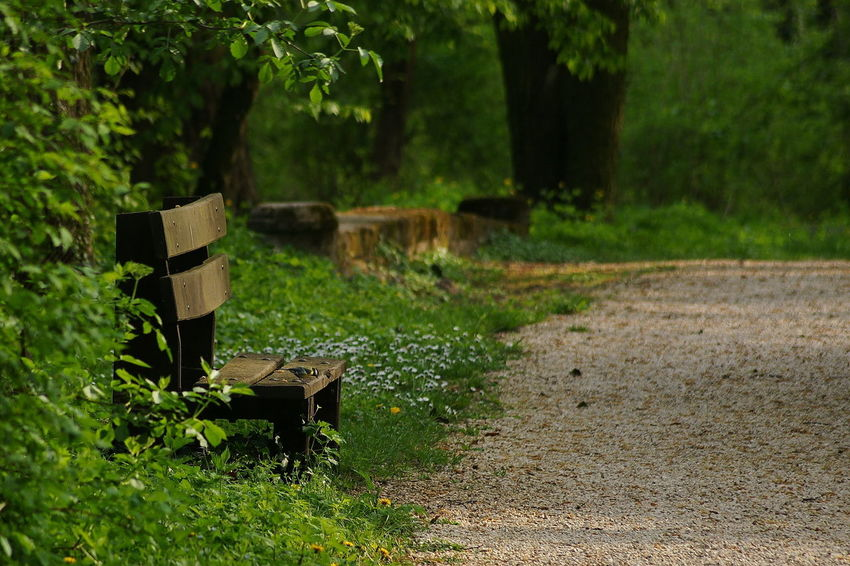 Bench with birdie Bench Calmness Nature No People Pathway Relax Relaxation Sunlight Titmouse
