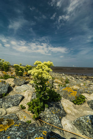 Stone Material Nature_collection EyeEm Nature Lover Nikon D750 Beauty In Nature Cloud - Sky Land Landscape Nature Nordsee Outdoors Scenics - Nature Sky The Traveler - 2018 EyeEm Awards The Great Outdoors - 2018 EyeEm Awards Horizon Over Water Seascape