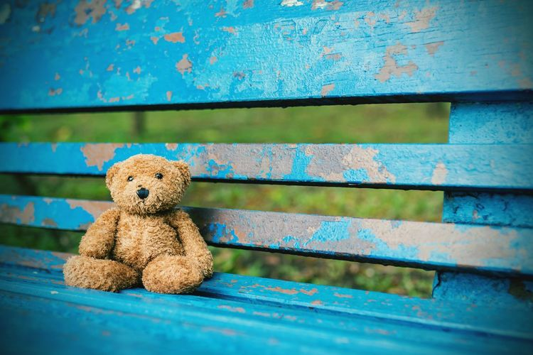 bear,bench,garden,lonely,alone,waiting