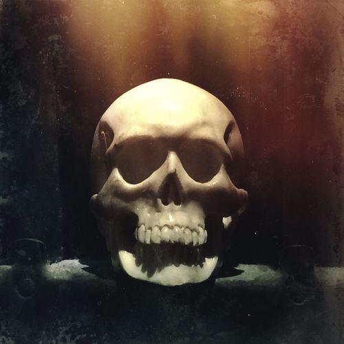 Skull Skulls Still Life