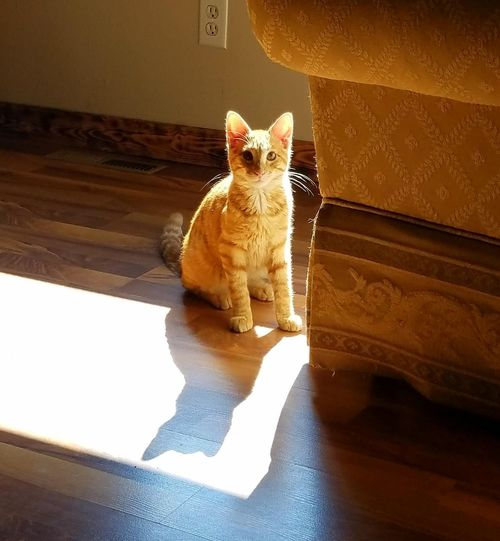Shadow Shadows & Lights Check This Out Friend Pets Portrait Sitting Feline Domestic Cat Kitten Looking At Camera Yellow Cute Ginger Cat