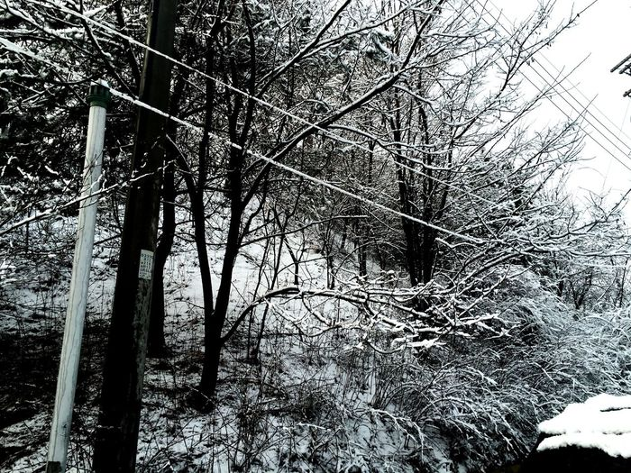 Winter Outdoors Tree Beauty In Nature Nature Day Branch No People Growth Snow Low Angle View Cold Temperature Sky Close-up The Week On EyeEm Black And White Friday