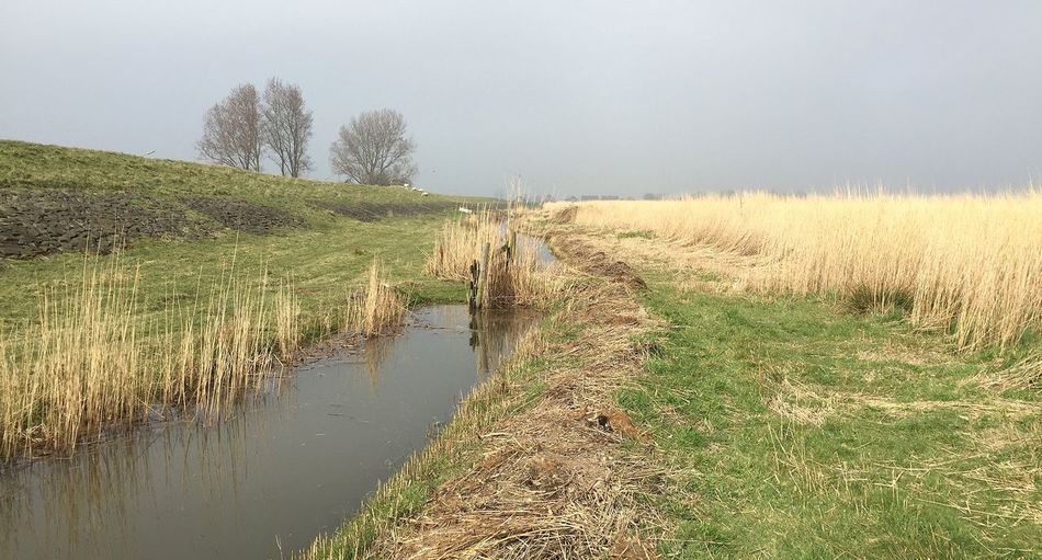 dutch spring in amsterdam Plant Water Grass Landscape Nature Environment Land Tranquility Tranquil Scene No People Field Scenics - Nature Beauty In Nature Growth Non-urban Scene Day Sky Tree Outdoors Marsh Stream - Flowing Water Timothy Grass Canal
