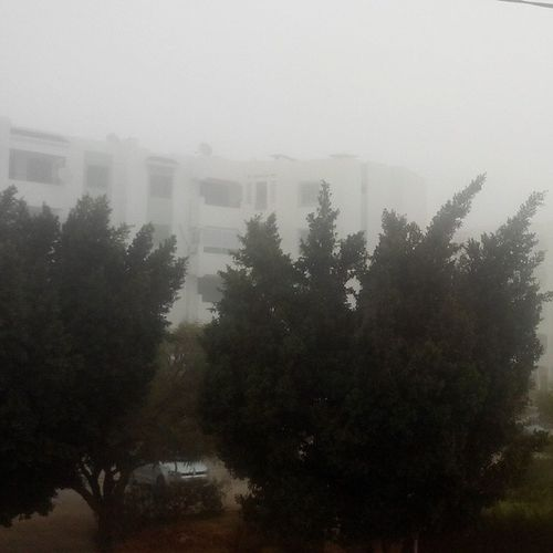 Have a nice foggy gloomy day Morning Bonjour Foggs Gloom sky weather november