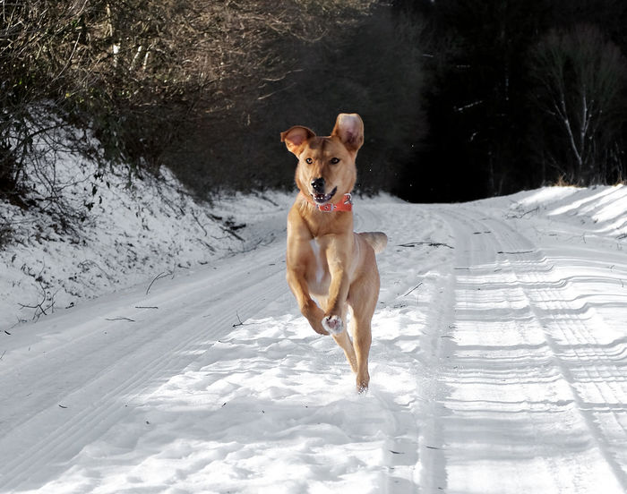 Animal Themes Cold Temperature Day Dog Dog Running Full Length Fun Mammal Motion Nature No People One Animal Outdoors Pets Portrait Snow Tree Winter