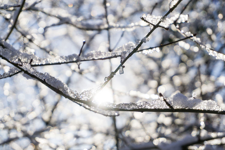 Close-up of frozen branches during winter