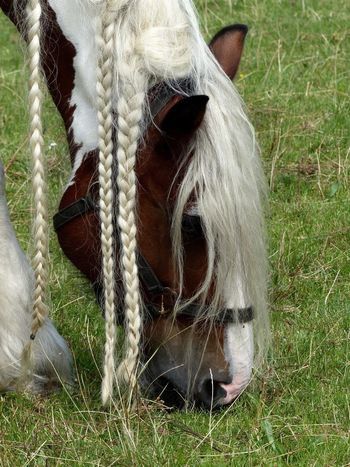 Grass Day Close-up No People Outdoors Domestic Animals Animal Themes Mammal Horse Hairstyle Pretty Pretty Horse