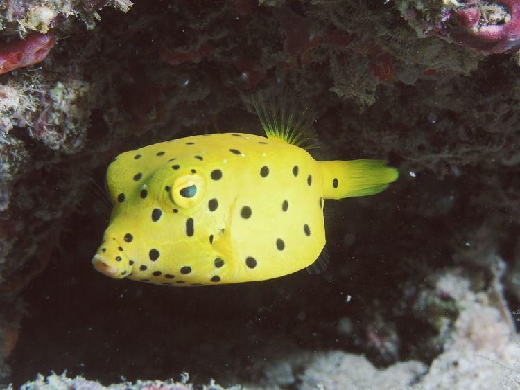 Taucher Unterwasserkamera Coral Reefs Coral Reef Maledives Malediven  Diving Tauchspot Unterwasser Underwater Photography Underwaterlife Tauchgang Maldives Tauchen Diver Crazy Animals  KofferfischUnterwasserwelt