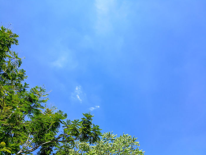 Freshness Peace Beauty In Nature Blue Branch Cloud - Sky Colorful Day Fresh Green Color Growth Leaf Low Angle View Nature Outdoors Plant Plant Part Scenics - Nature Sky Summer Sunlight Tranquil Scene Tranquility Tree Treetop