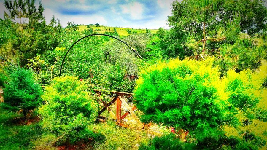 Nature Eyemlover Life In Colors Relaxing EyeEm Nature Lover Beauty Enjoying Life EyeEm Green Forest