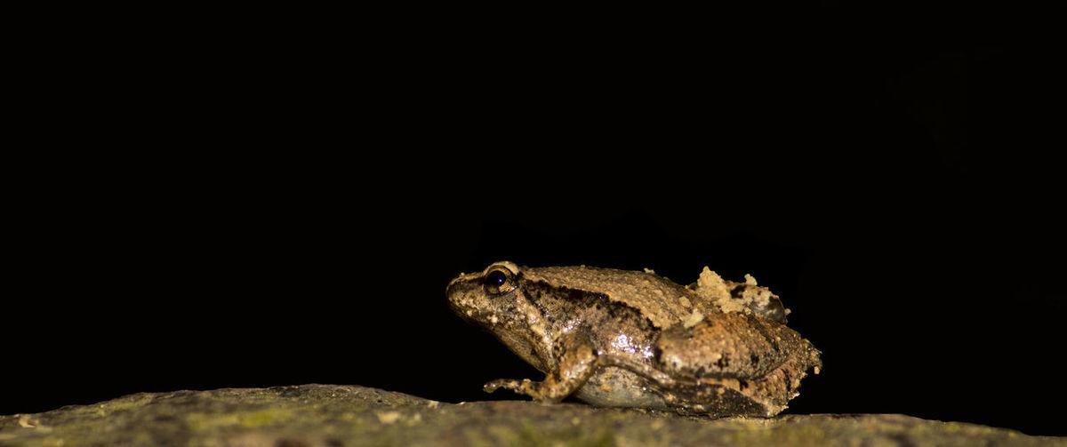 Frog Herping Nightphotography