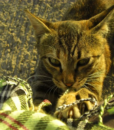 yaramaz kedi... Cat Walking Around