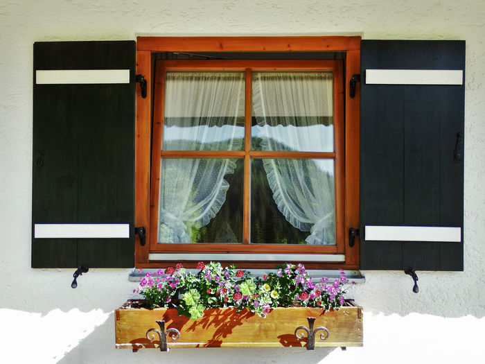 Window Box Architectural Detail In Windows Beauty In Nature Beauty In The Everyday Building Exterior Built Structure Day Flower Glass Ivy Lace Curtains Nature No People Outdoors Purple Flowers Shutter Snow Spring In Germany Springtime Blossoms Vibrant Colors Window Window Box Window Gardening Winter Wooden Window Box Yellow Flowers