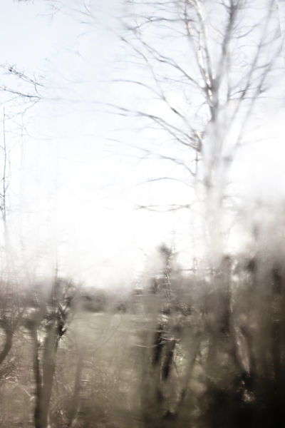 Abstract Bare Tree Beauty In Nature Blurry Broken Day Diffuse Fragility Nature No People Outdoors Scenics Sky Tranquil Scene Tranquility Tree Window