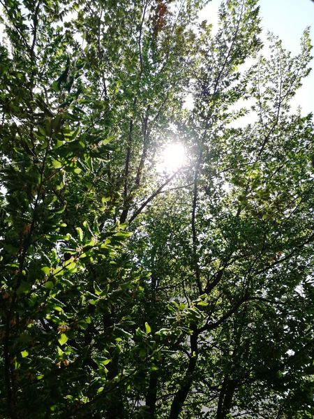 Italy Trees Sun Tree Branch Forest Sunlight Leaf Sky Plant Green Color Sun Sunrise Solar Flare Sunrays Woods Treetop Greenery