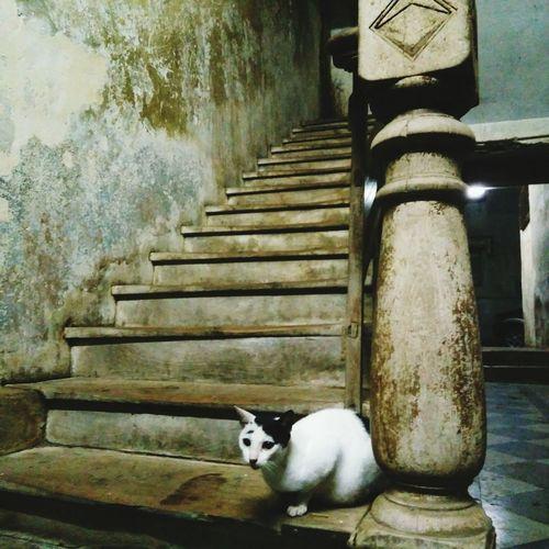 Steps Pets