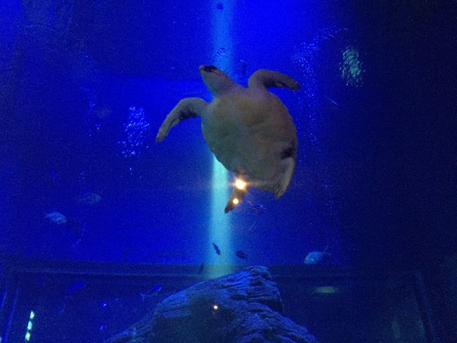 Share Your Adventure Turtle Love Sea Turtle Swimming Cool Blue Ocean Blue EyeEm Best Shots