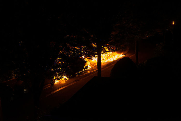Silhouette trees by illuminated street at night