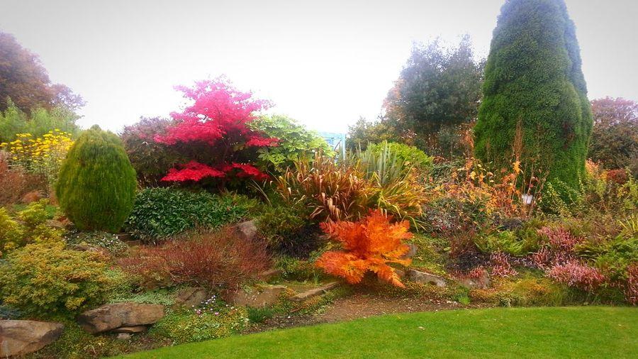 Autumn in the park 2