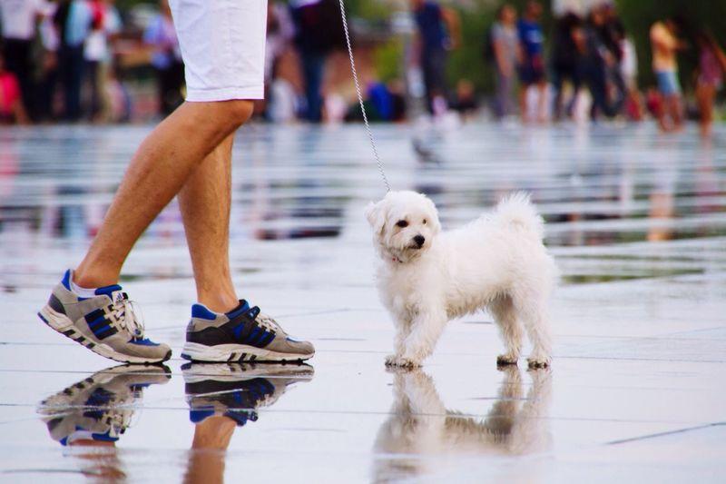 Dog And Owner Dog White Dog Dog On Water Feet And Dog Dedendum Animal Streetphotography Bordeaux Miroir D'eau