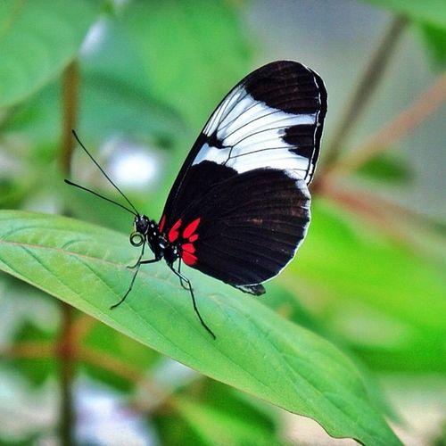 Butterfly Schmetterling Zoo Krefeld